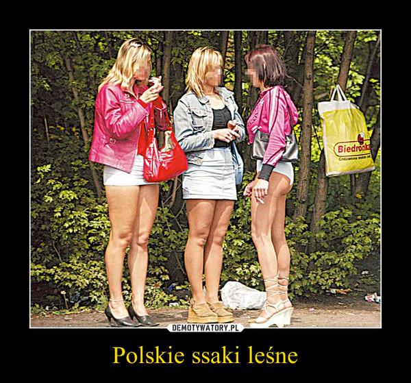 Polskie ssaki leśne –