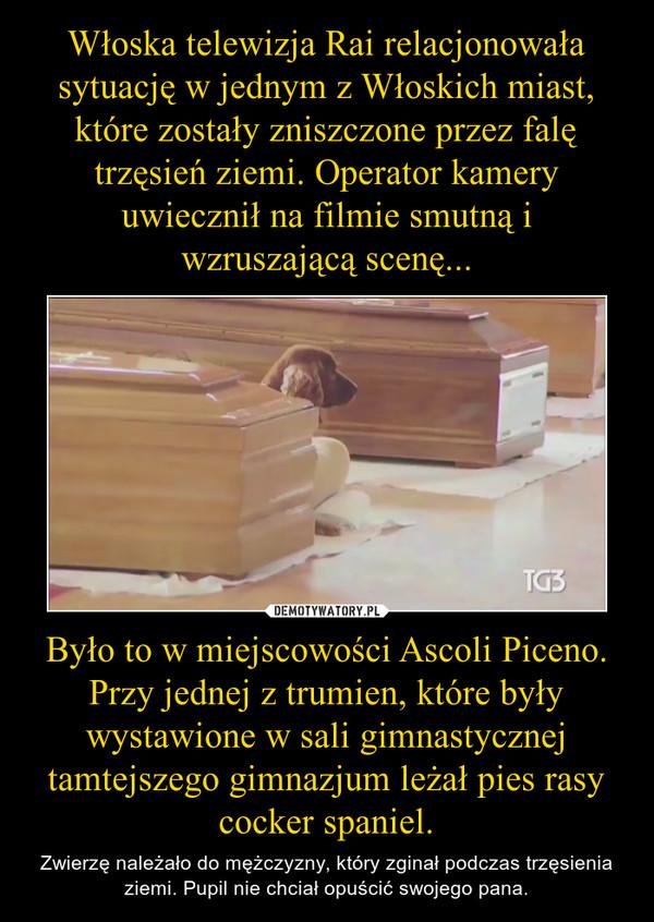 Było to w miejscowości Ascoli Piceno. Przy jednej z trumien, które były wystawione w sali gimnastycznej tamtejszego gimnazjum leżał pies rasy cocker spaniel. – Zwierzę należało do mężczyzny, który zginał podczas trzęsienia ziemi. Pupil nie chciał opuścić swojego pana.