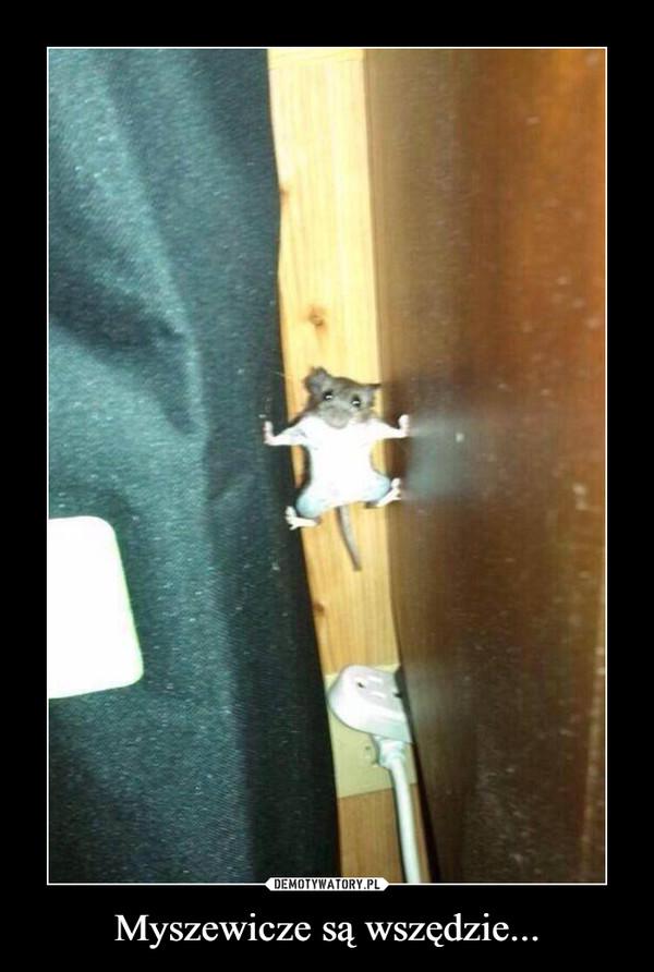 Myszewicze są wszędzie...
