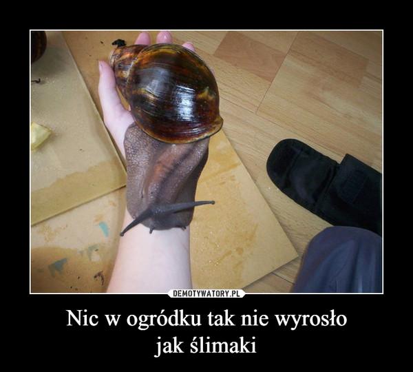 Nic w ogródku tak nie wyrosłojak ślimaki –