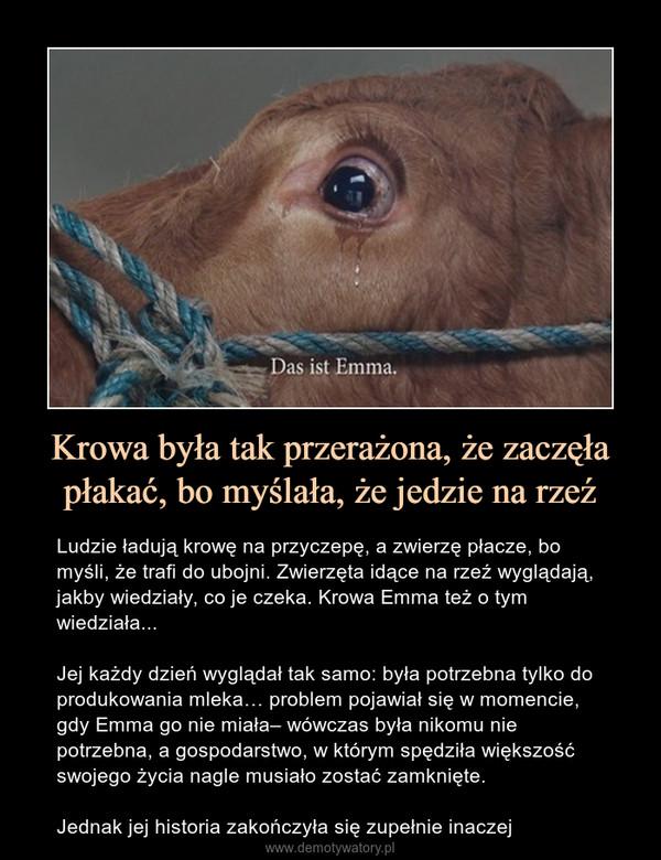 Krowa była tak przerażona, że zaczęła płakać, bo myślała, że jedzie na rzeź – Ludzie ładują krowę na przyczepę, a zwierzę płacze, bo myśli, że trafi do ubojni. Zwierzęta idące na rzeź wyglądają, jakby wiedziały, co je czeka. Krowa Emma też o tym wiedziała... Jej każdy dzień wyglądał tak samo: była potrzebna tylko do produkowania mleka… problem pojawiał się w momencie, gdy Emma go nie miała– wówczas była nikomu nie potrzebna, a gospodarstwo, w którym spędziła większość swojego życia nagle musiało zostać zamknięte.Jednak jej historia zakończyła się zupełnie inaczej