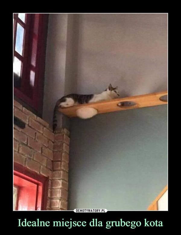 Idealne miejsce dla grubego kota –