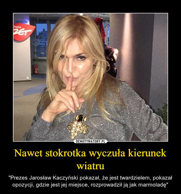 """Nawet stokrotka wyczuła kierunek wiatru – """"Prezes Jarosław Kaczyński pokazał, że jest twardzielem, pokazał opozycji, gdzie jest jej miejsce, rozprowadził ją jak marmoladę"""""""