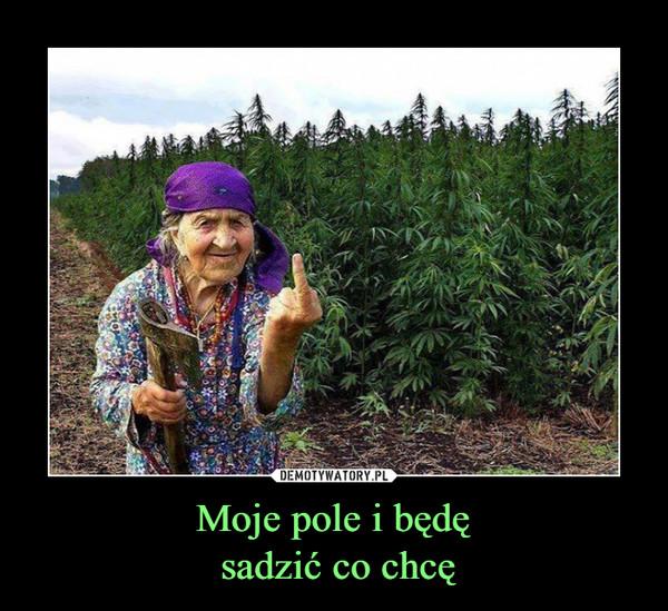 Moje pole i będę sadzić co chcę –