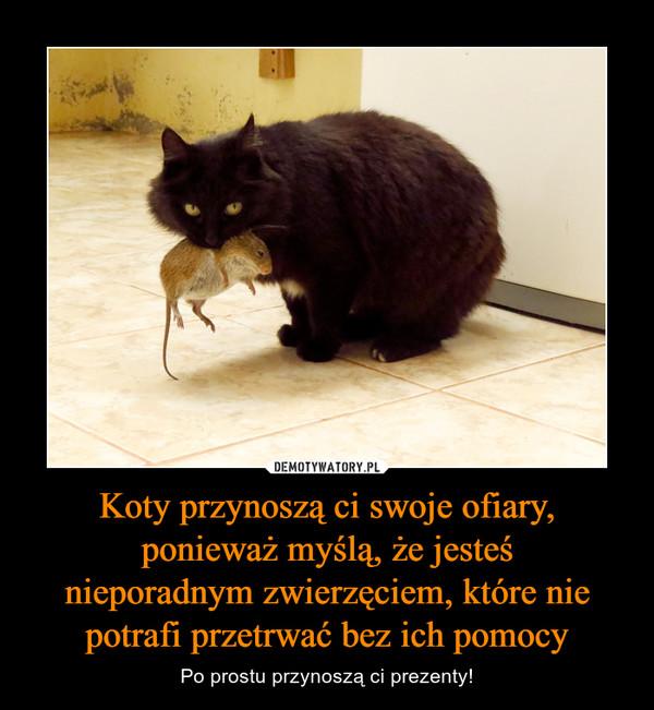 Koty przynoszą ci swoje ofiary, ponieważ myślą, że jesteśnieporadnym zwierzęciem, które nie potrafi przetrwać bez ich pomocy – Po prostu przynoszą ci prezenty!