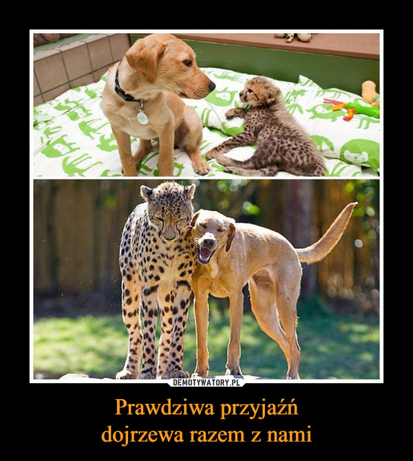 1486572460_kihutz_600.jpg