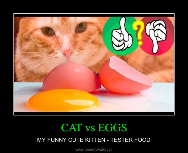 CAT vs EGGS – MY FUNNY CUTE KITTEN - TESTER FOOD