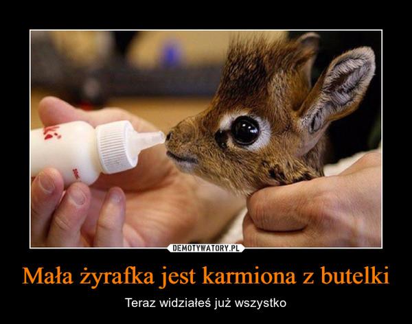 Mała żyrafka jest karmiona z butelki – Teraz widziałeś już wszystko