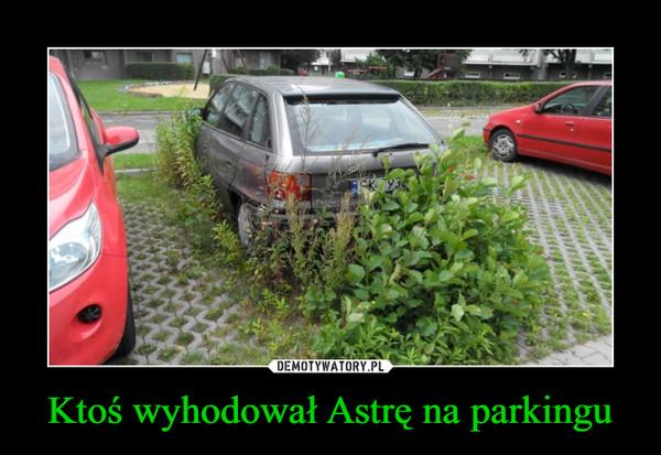 Ktoś wyhodował Astrę na parkingu –
