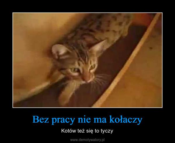Bez pracy nie ma kołaczy – Kotów też się to tyczy
