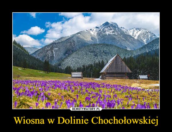 Wiosna w Dolinie Chochołowskiej –