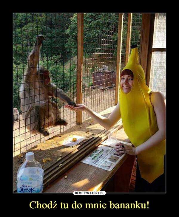 Chodź tu do mnie bananku! –