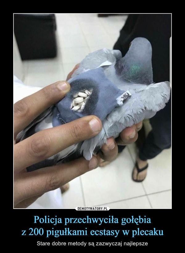 Policja przechwyciła gołębiaz 200 pigułkami ecstasy w plecaku – Stare dobre metody są zazwyczaj najlepsze