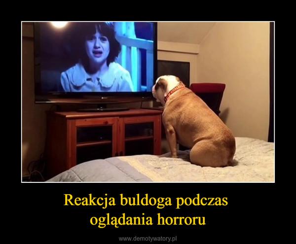 Reakcja buldoga podczas oglądania horroru –