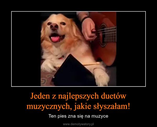 Jeden z najlepszych duetów muzycznych, jakie słyszałam! – Ten pies zna się na muzyce