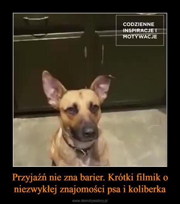 Przyjaźń nie zna barier. Krótki filmik o niezwykłej znajomości psa i koliberka –  CODZIENNE INSPIRACJE I MOTYWACJE
