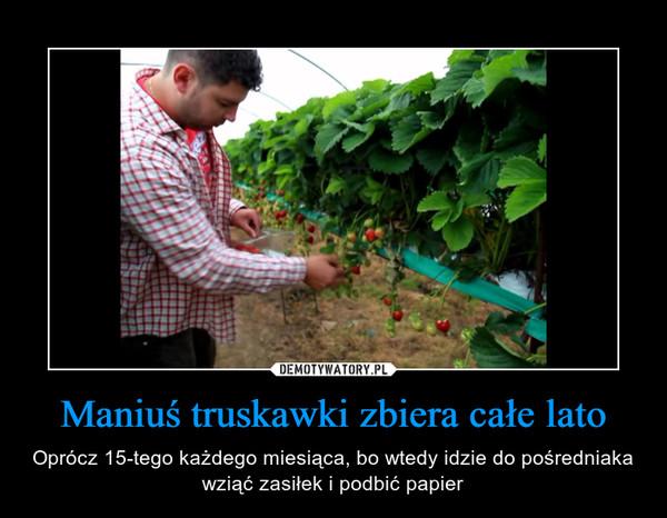 Maniuś truskawki zbiera całe lato – Oprócz 15-tego każdego miesiąca, bo wtedy idzie do pośredniaka wziąć zasiłek i podbić papier