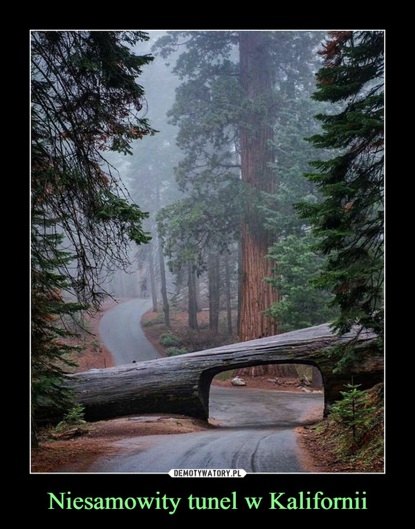 Niesamowity tunel w Kalifornii –