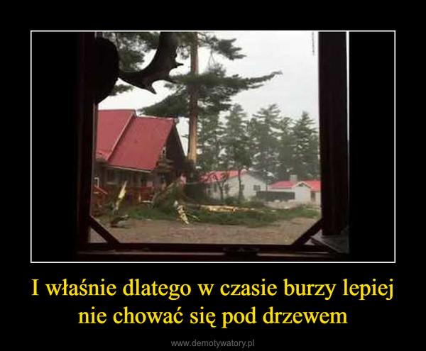 I właśnie dlatego w czasie burzy lepiej nie chować się pod drzewem –