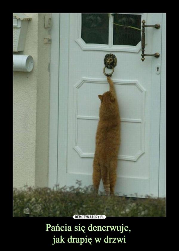 Pańcia się denerwuje, jak drapię w drzwi –