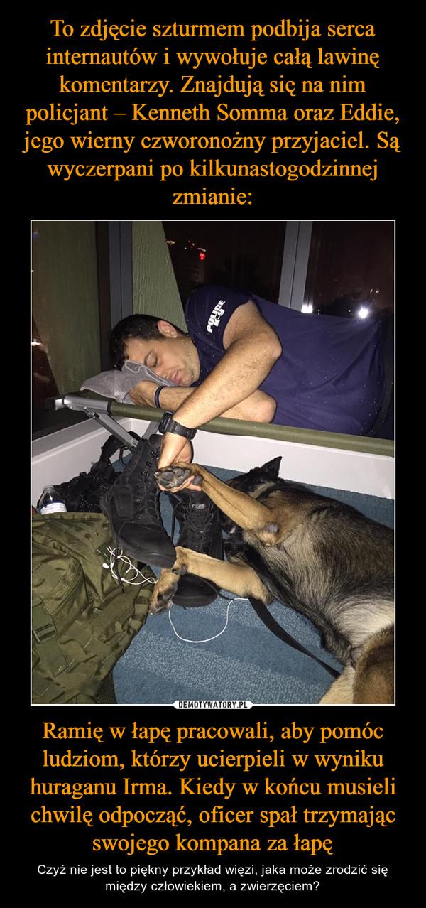 Ramię w łapę pracowali, aby pomóc ludziom, którzy ucierpieli w wyniku huraganu Irma. Kiedy w końcu musieli chwilę odpocząć, oficer spał trzymając swojego kompana za łapę – Czyż nie jest to piękny przykład więzi, jaka może zrodzić się między człowiekiem, a zwierzęciem?