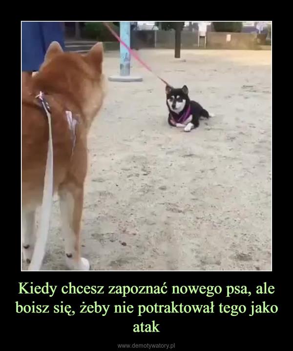 Kiedy chcesz zapoznać nowego psa, ale boisz się, żeby nie potraktował tego jako atak –