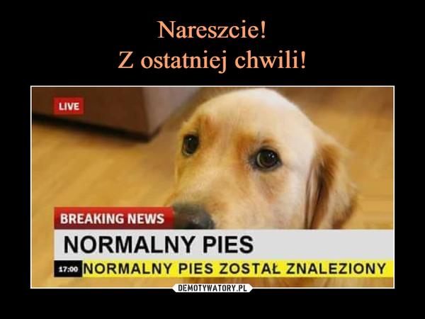 –  normalny pies został znaleziony