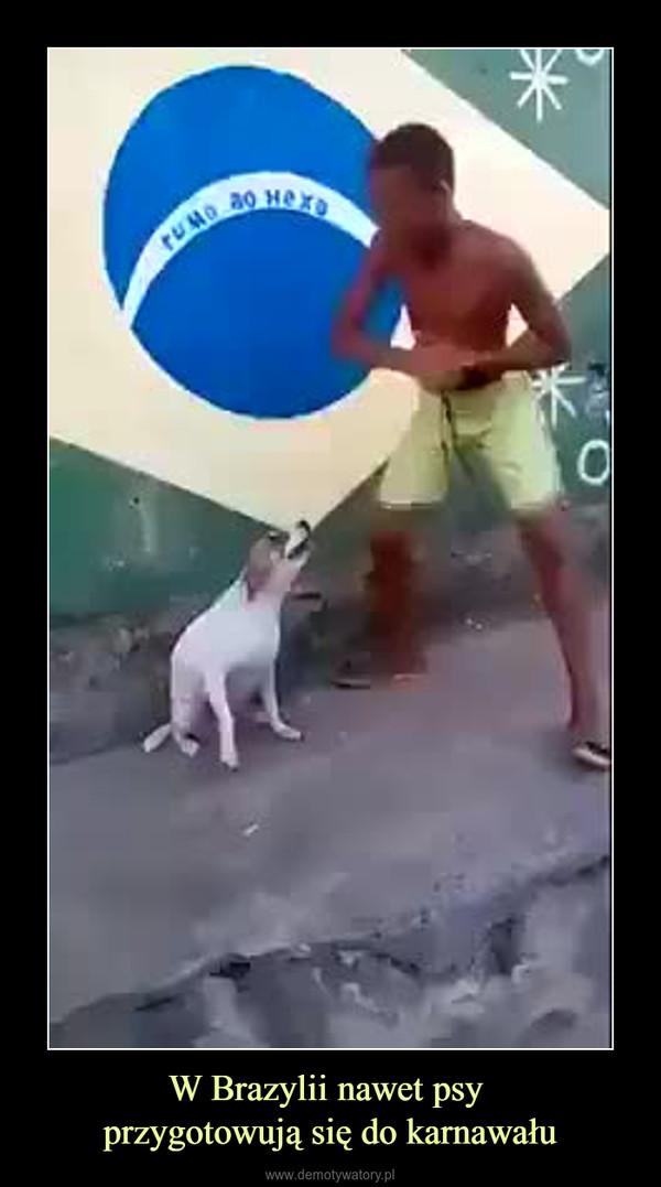 W Brazylii nawet psy przygotowują się do karnawału –