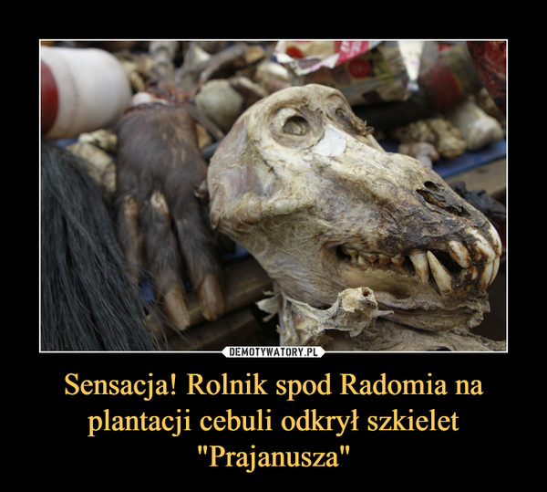 """Sensacja! Rolnik spod Radomia na plantacji cebuli odkrył szkielet """"Prajanusza"""" –"""
