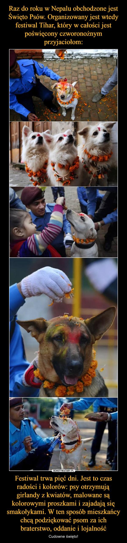 Festiwal trwa pięć dni. Jest to czas radości i kolorów: psy otrzymują girlandy z kwiatów, malowane są kolorowymi proszkami i zajadają się smakołykami. W ten sposób mieszkańcy chcą podziękować psom za ich braterstwo, oddanie i lojalność – Cudowne święto!