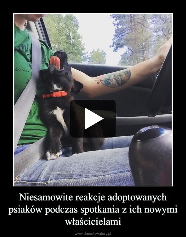 Niesamowite reakcje adoptowanych psiaków podczas spotkania z ich nowymi właścicielami –