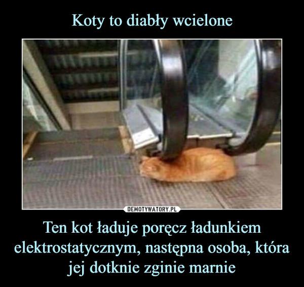 Ten kot ładuje poręcz ładunkiem elektrostatycznym, następna osoba, która jej dotknie zginie marnie –