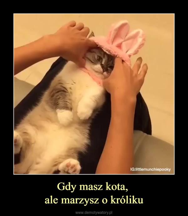 Gdy masz kota, ale marzysz o króliku –