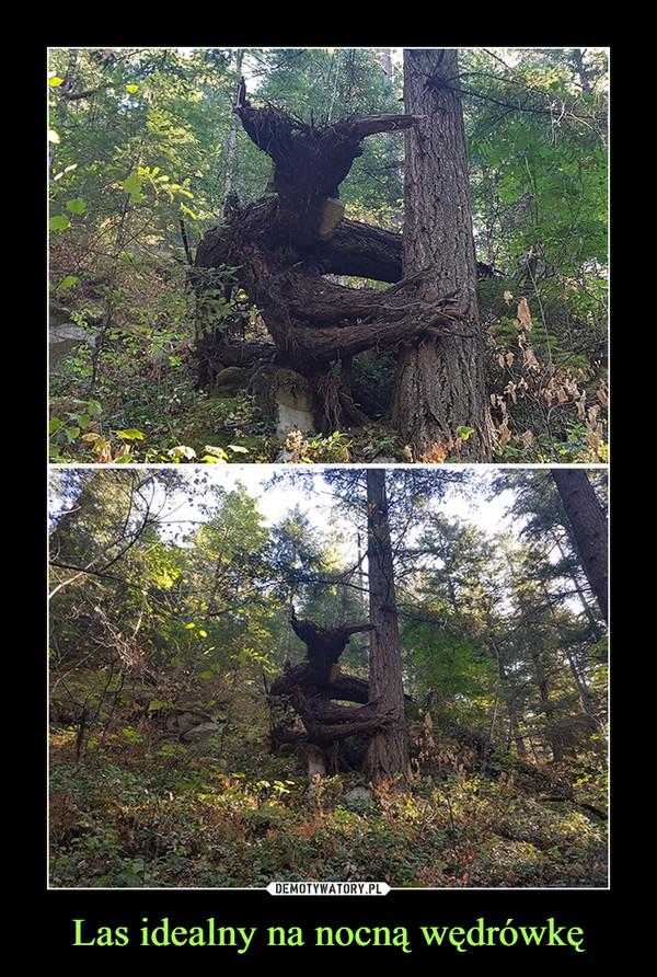 Las idealny na nocną wędrówkę –