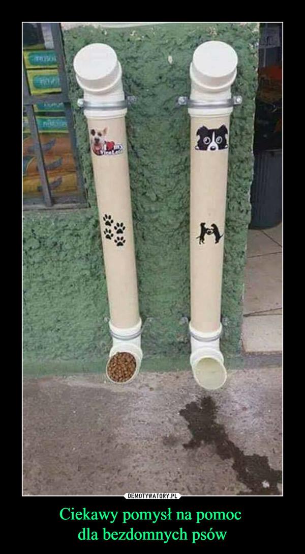Ciekawy pomysł na pomoc dla bezdomnych psów –