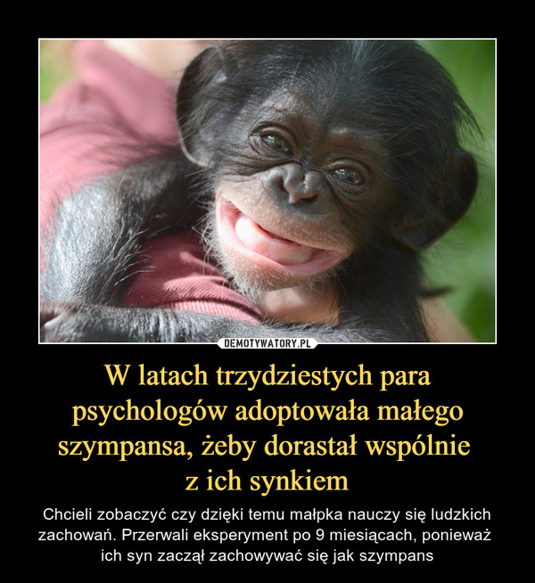 W latach trzydziestych para psychologów adoptowała małego szympansa, żeby dorastał wspólnie z ich synkiem – Chcieli zobaczyć czy dzięki temu małpka nauczy się ludzkich zachowań. Przerwali eksperyment po 9 miesiącach, ponieważ ich syn zaczął zachowywać się jak szympans