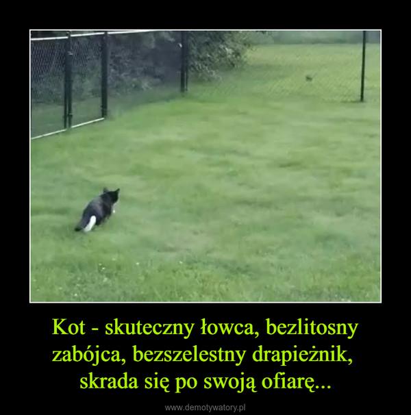 Kot - skuteczny łowca, bezlitosny zabójca, bezszelestny drapieżnik, skrada się po swoją ofiarę... –