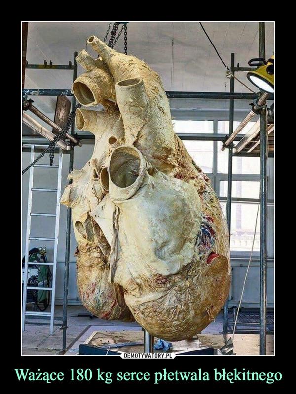 Ważące 180 kg serce płetwala błękitnego –