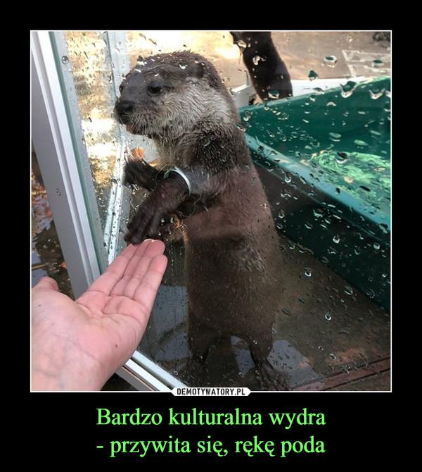 Bardzo kulturalna wydra- przywita się, rękę poda –