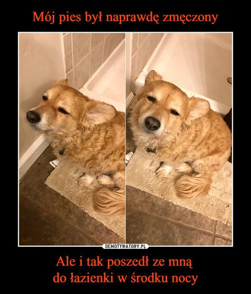 Mój pies był naprawdę zmęczony Ale i tak poszedł ze mną  do łazienki w środku nocy