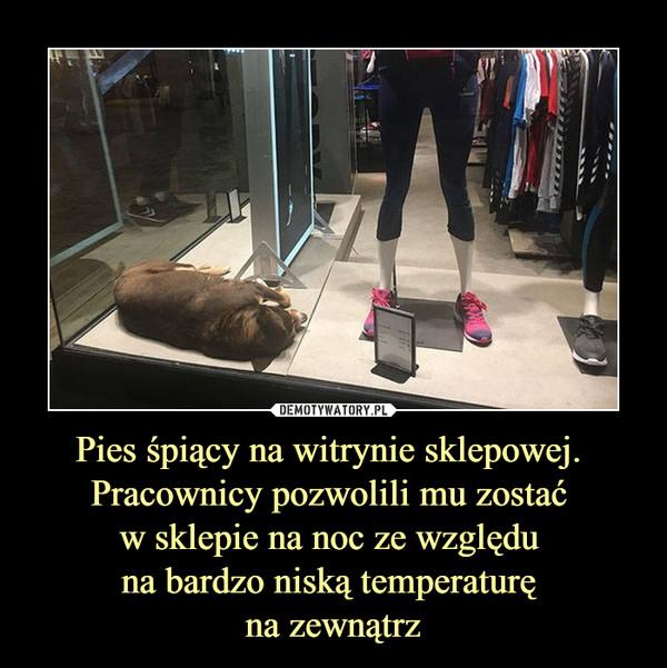 Pies śpiący na witrynie sklepowej. Pracownicy pozwolili mu zostać w sklepie na noc ze względu na bardzo niską temperaturę na zewnątrz –
