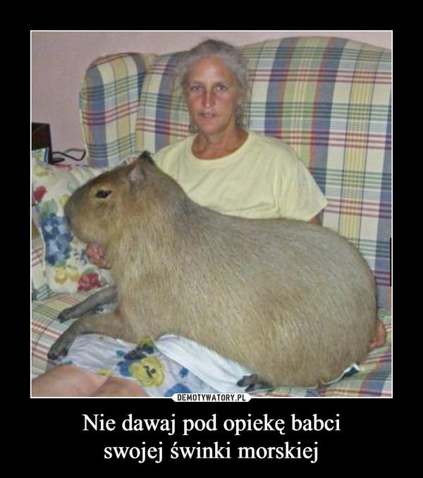 Nie dawaj pod opiekę babciswojej świnki morskiej –
