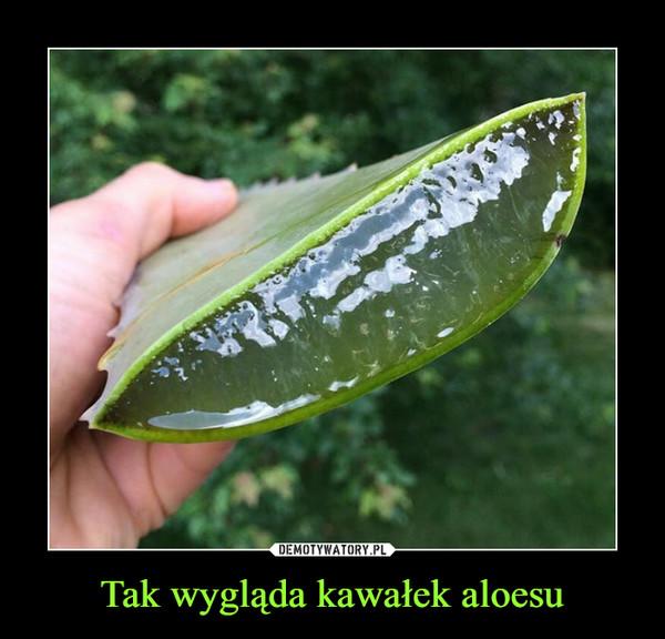 Tak wygląda kawałek aloesu –