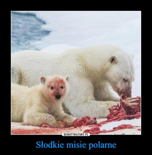 Słodkie misie polarne –