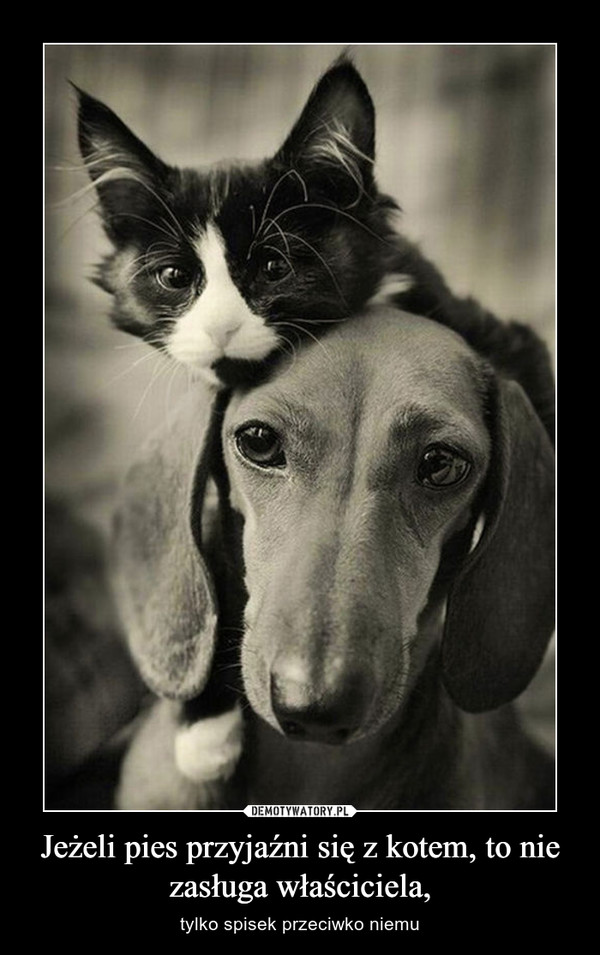 Jeżeli pies przyjaźni się z kotem, to nie zasługa właściciela, – tylko spisek przeciwko niemu