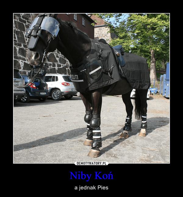 Niby Koń – a jednak Pies