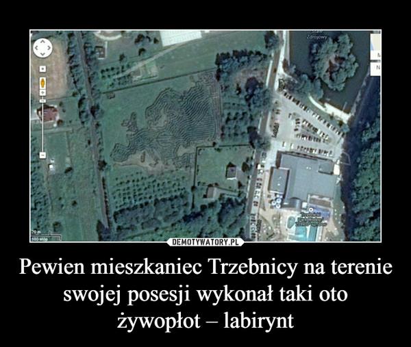 Pewien mieszkaniec Trzebnicy na terenie swojej posesji wykonał taki oto żywopłot – labirynt –