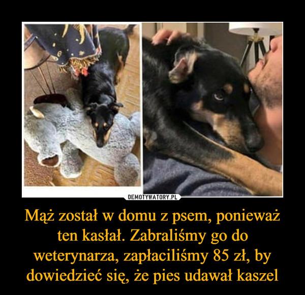 Mąż został w domu z psem, ponieważ ten kasłał. Zabraliśmy go do weterynarza, zapłaciliśmy 85 zł, by dowiedzieć się, że pies udawał kaszel –