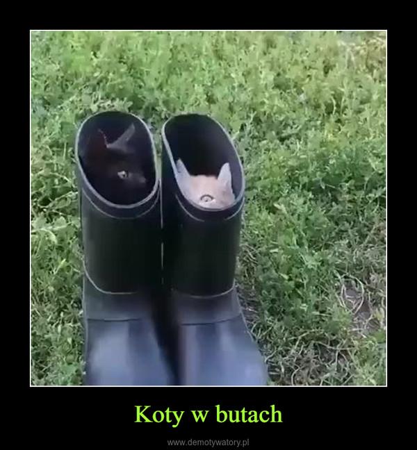 Koty w butach –