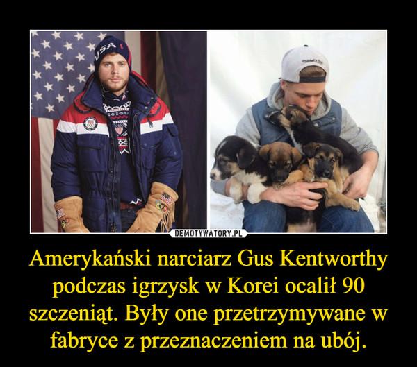 Amerykański narciarz Gus Kentworthy podczas igrzysk w Korei ocalił 90 szczeniąt. Były one przetrzymywane w fabryce z przeznaczeniem na ubój. –